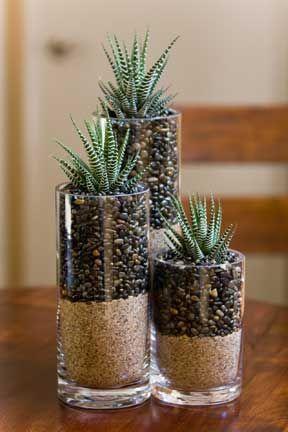 Coltivare piante in bottiglia