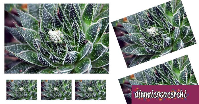 Piante grasse da interno piante cascanti da interno - Piante grasse da esterno pendenti ...