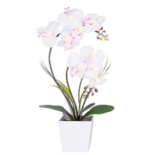 vaso per piante orchidee