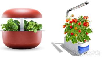 Erbe aromatiche: come coltivarle in cucina