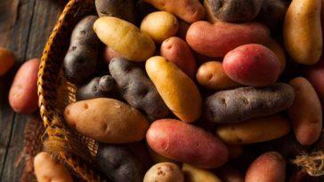 Come Conservare le Patate