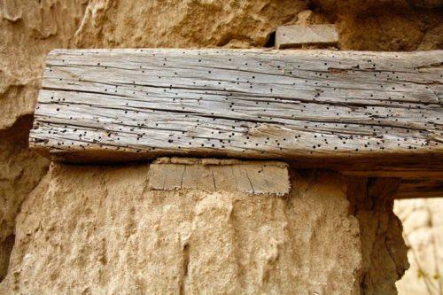 Tarlo del legno: come eliminarlo