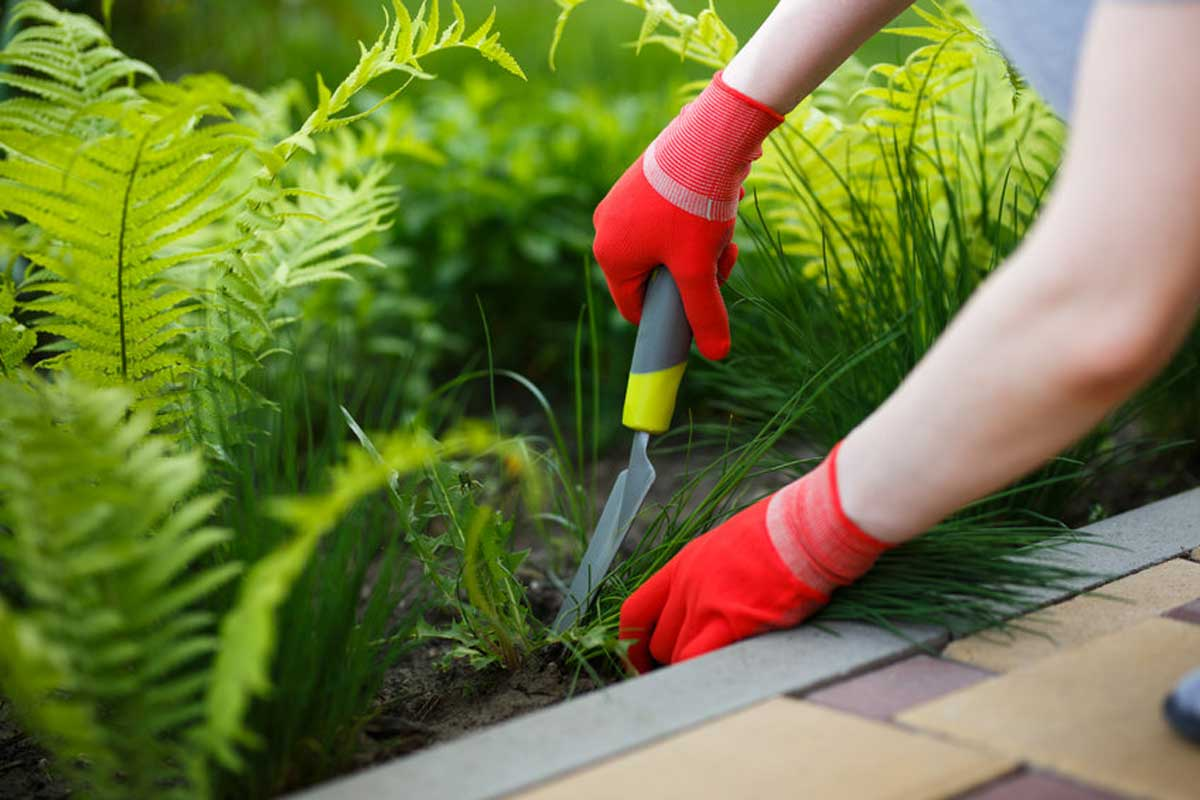 Come eliminare le erbacce in modo naturale